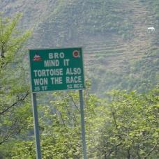 BRO Mind It Tortoise Also Won The Race