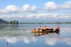 Shikaras on Dal Lake, Srinagar, Kashmir