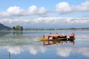 Shikaras on Dal Lake, Srinagar, Kashmir