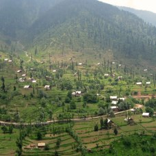 Kashmiri village and rice fields