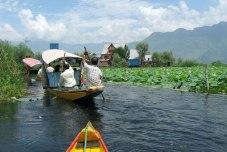 Shikara Ride on Dal Lake