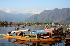 lots of shikaras on Dal Lake, Srinagar, Kashmir