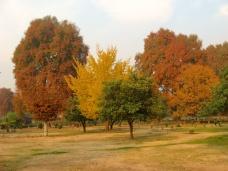 Fall colors at Harwan Park in Srinagar, Kashmir
