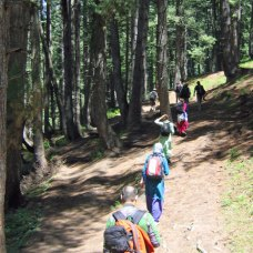 Trekking through the forest near Aru, Kashmir
